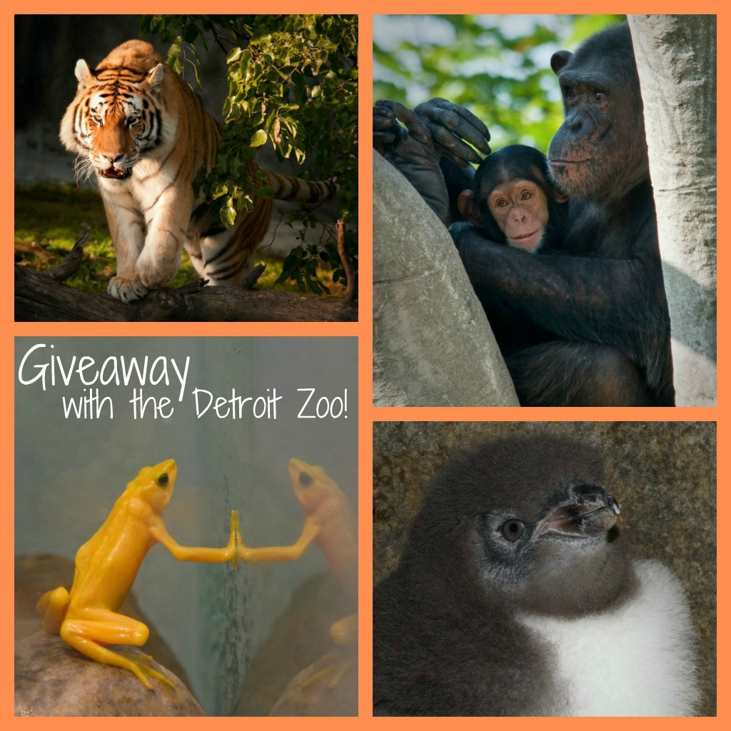 Detroit Zoo Collage